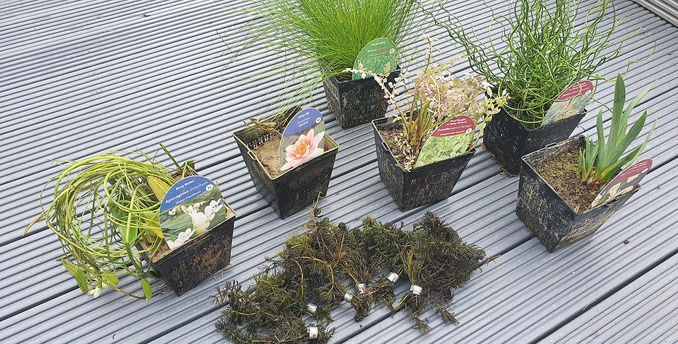 Plant Pack (inc Planters) Large