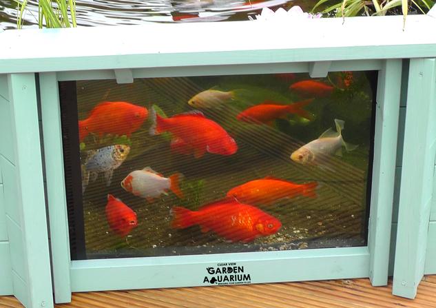 0 fish through window.png