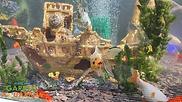 Lotus Clear View Garden Aquarium Ship Th