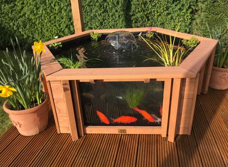 Quick and Easy to Setup your Garden Aquarium