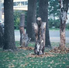 Trees, installation