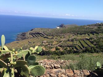 Pantelleria: l'Isola e i suoi tesori