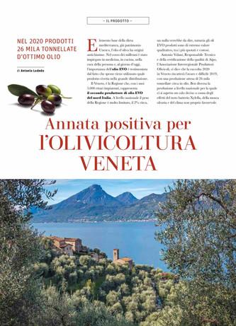 Annata positiva per l'olivicoltura veneta