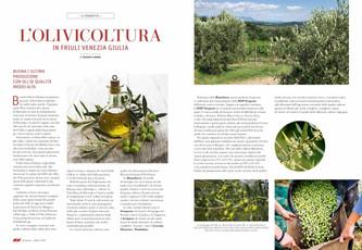 L'olivicoltura in Friuli Venezia Giulia