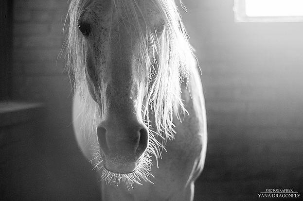 Лошади (4).jpg