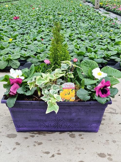 "15"" Laurel Window Box Wisteria - Planted Container"