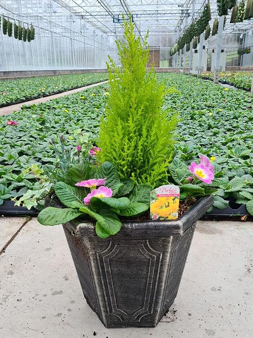"Estate Hexagonal 14"" -Planted Container"