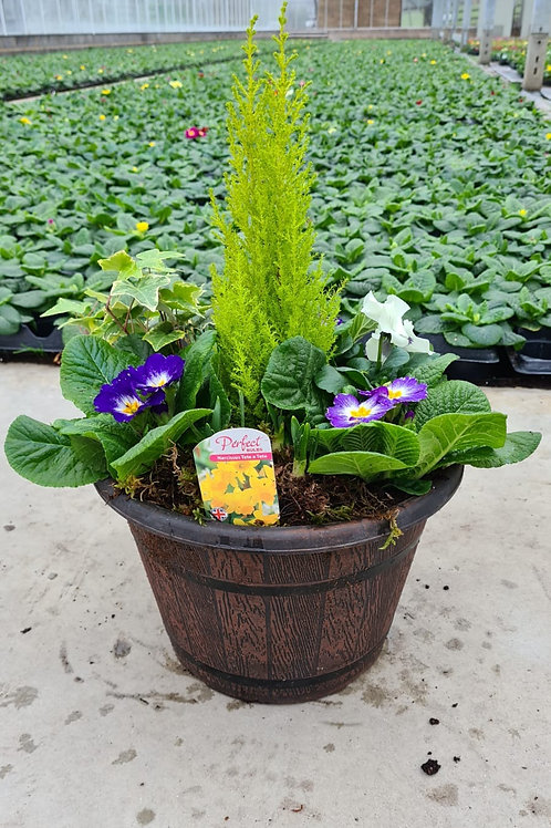 """16"""" Barrel Planter - Planted Container"""