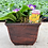 """Thumbnail: 7.5"""" Tulipa Square Copper - Planted Container"""