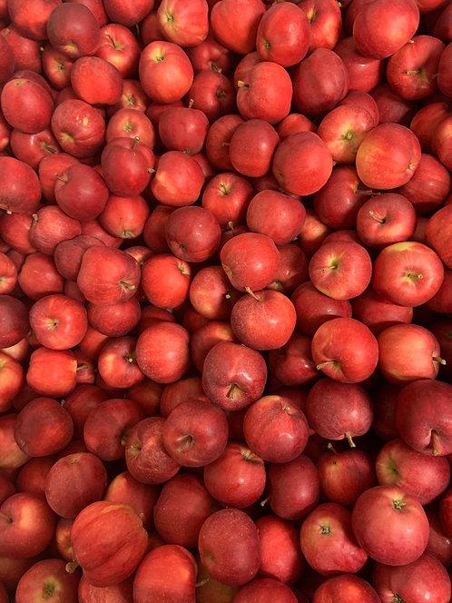Pommes Gala  (kg)