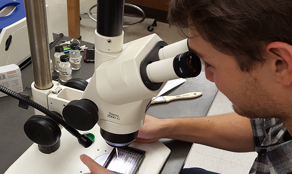 Student picking foraminifera