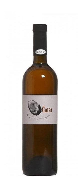 Vina Cotar - Malvazija Istriana