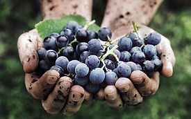 vini-naturali-caruso-e-minini-1080x675.j