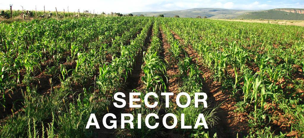 Sector_Agrícola.jpg