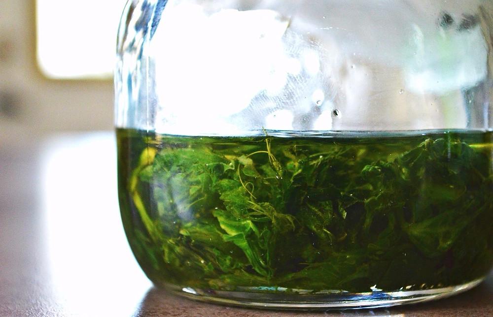 Macération de plantain dans l'huile