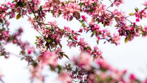 Najważniejszym kwiatem wiosny jest nadzieja