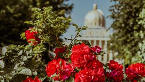 Sanktuarium Matki Bożej Licheńskiej Bolesnej Królowej Polski