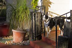 Bonnie on the porch