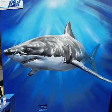 Shark - Lady Hill - 2020