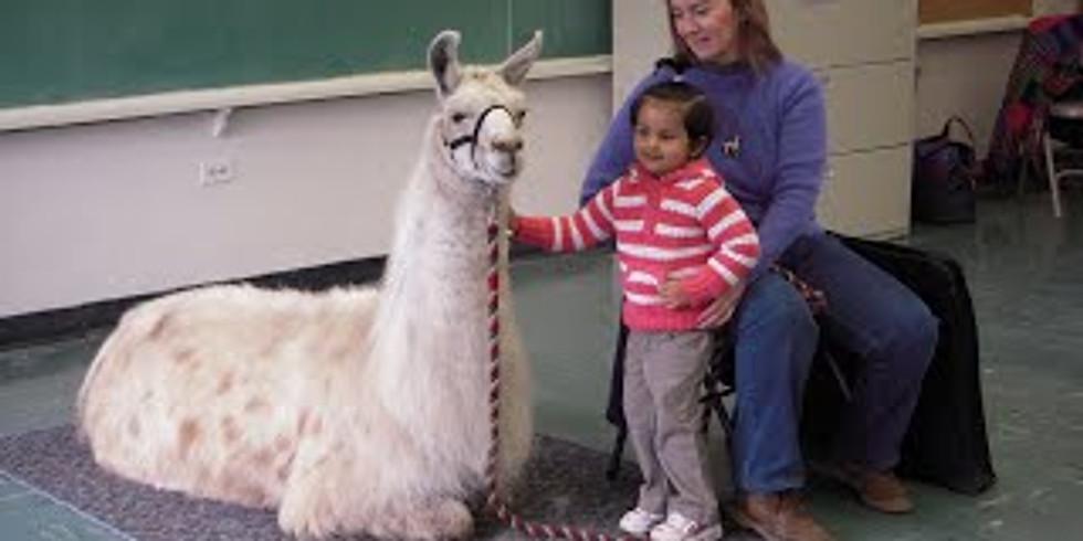 Waitlisting - Hooked on Llamas