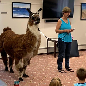 Jack the Llama visits the library!