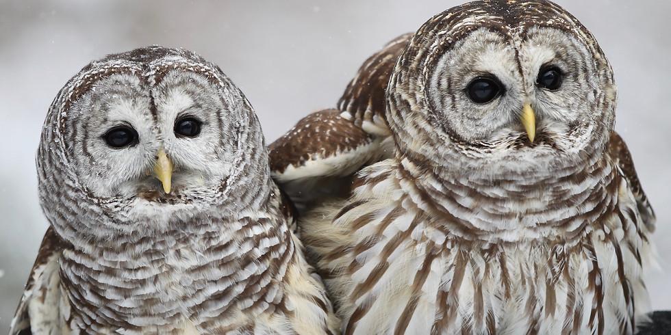 Christine's Critters Animal Ambassador Storytime - Baby Owls