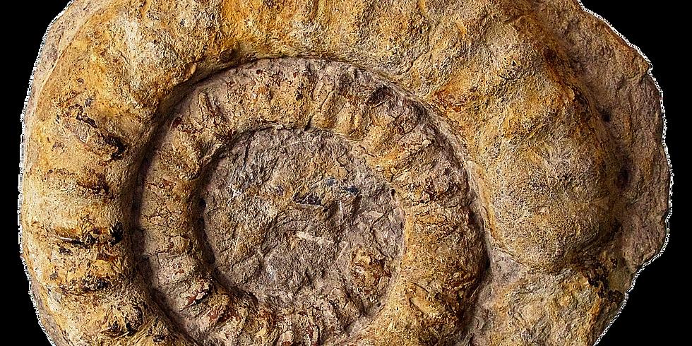 STEM: Fossils Rock!