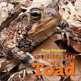 The Hidden Life of a Toad.jpg