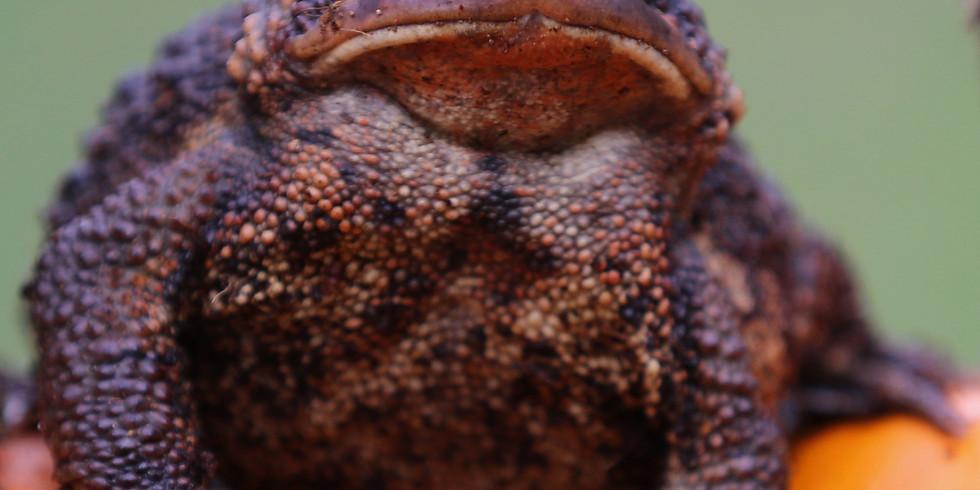 Christine's Critters Animal Ambassador Storytime - Frog & Toad