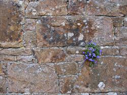 purple flowers on wall
