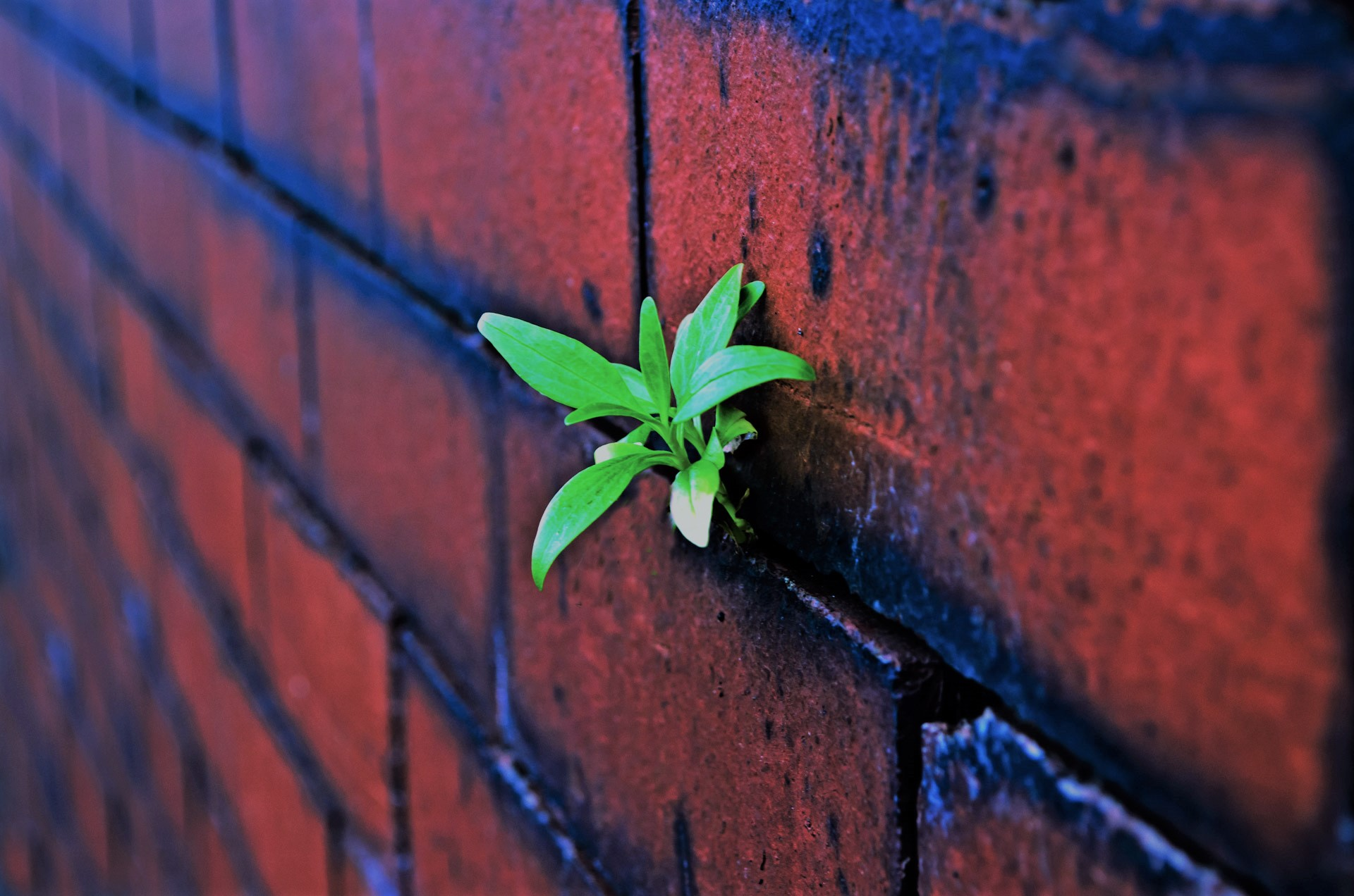 Red Brick wall plant2
