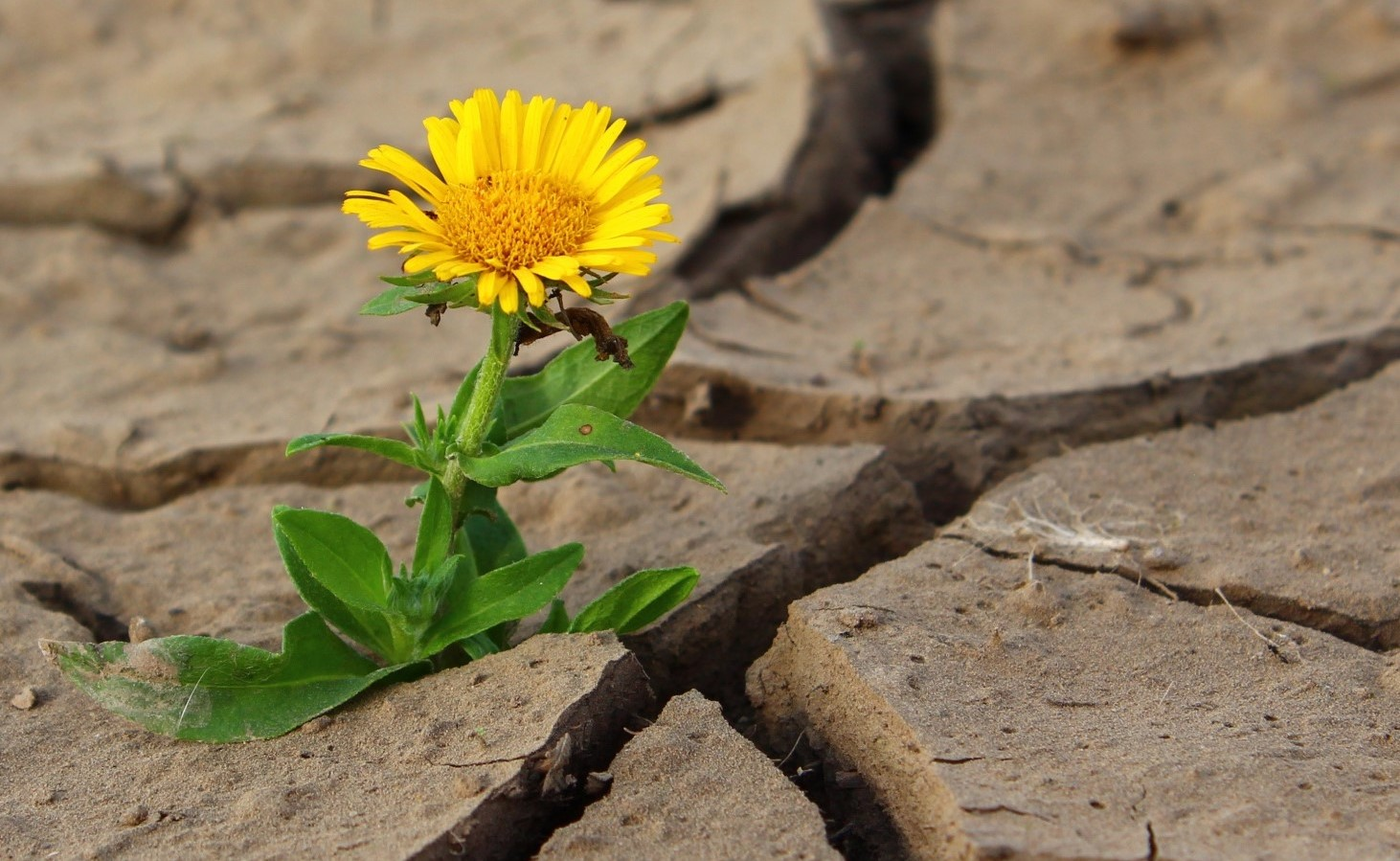 Yellow Flower out of crack3