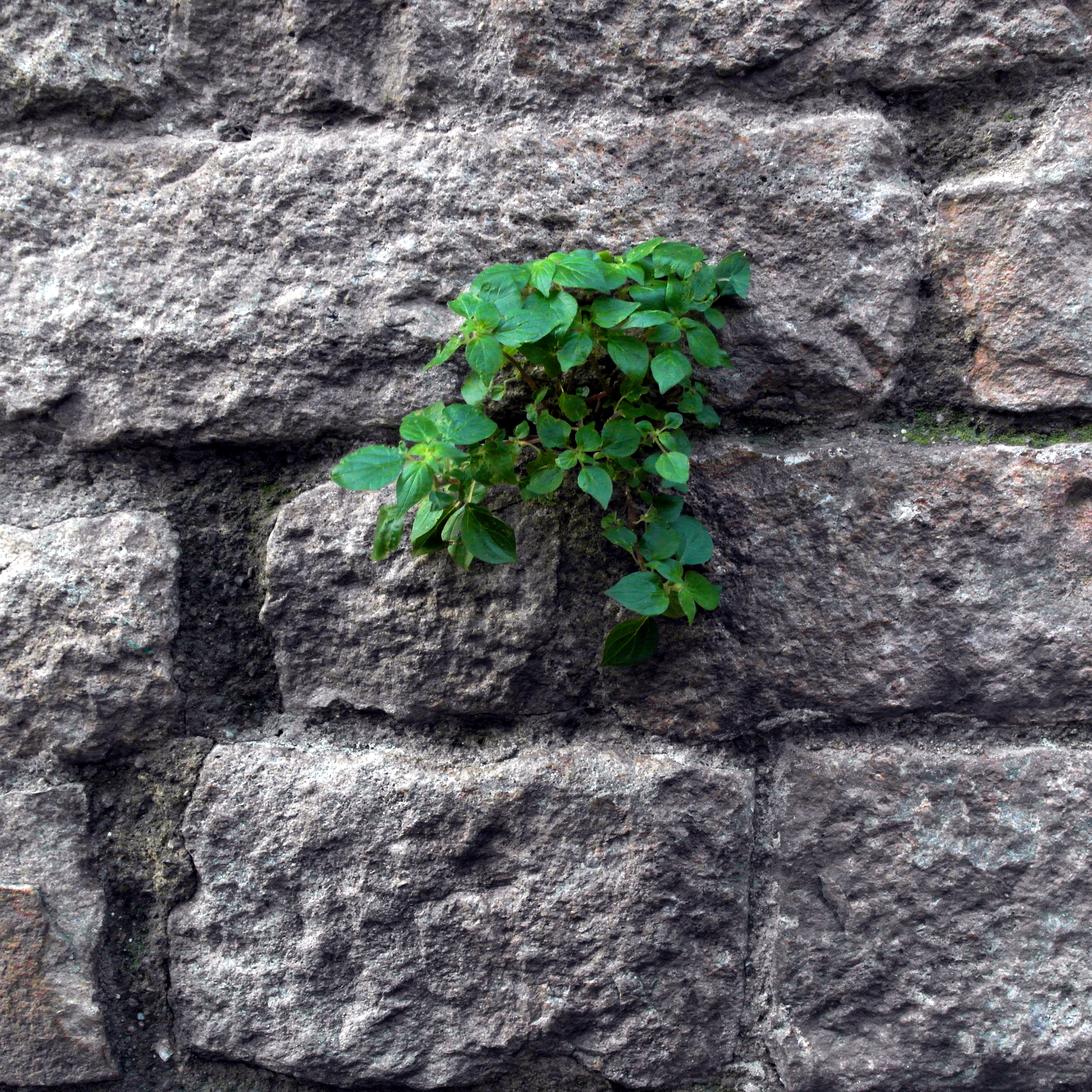 green plants on stone wall