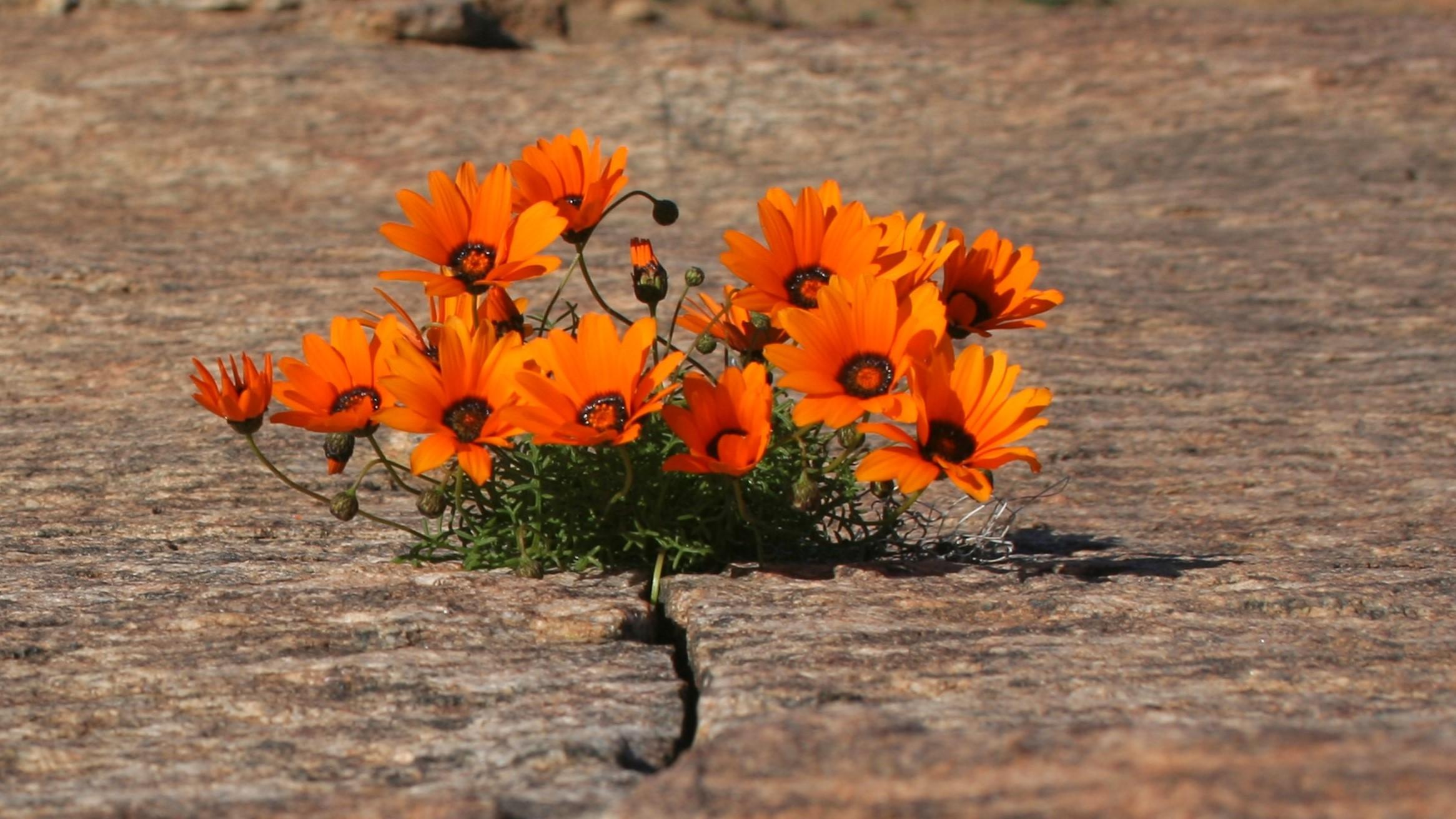 Orange Flower out of crack3