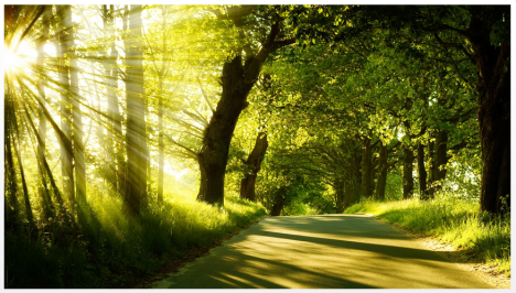 arbre-soleil-chemin.png