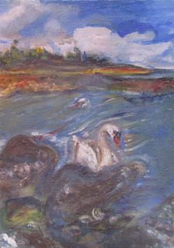 Sannox Beach Swan(s), Scotland