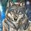 Thumbnail: Grey wolf