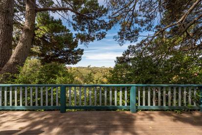 Views through the pines