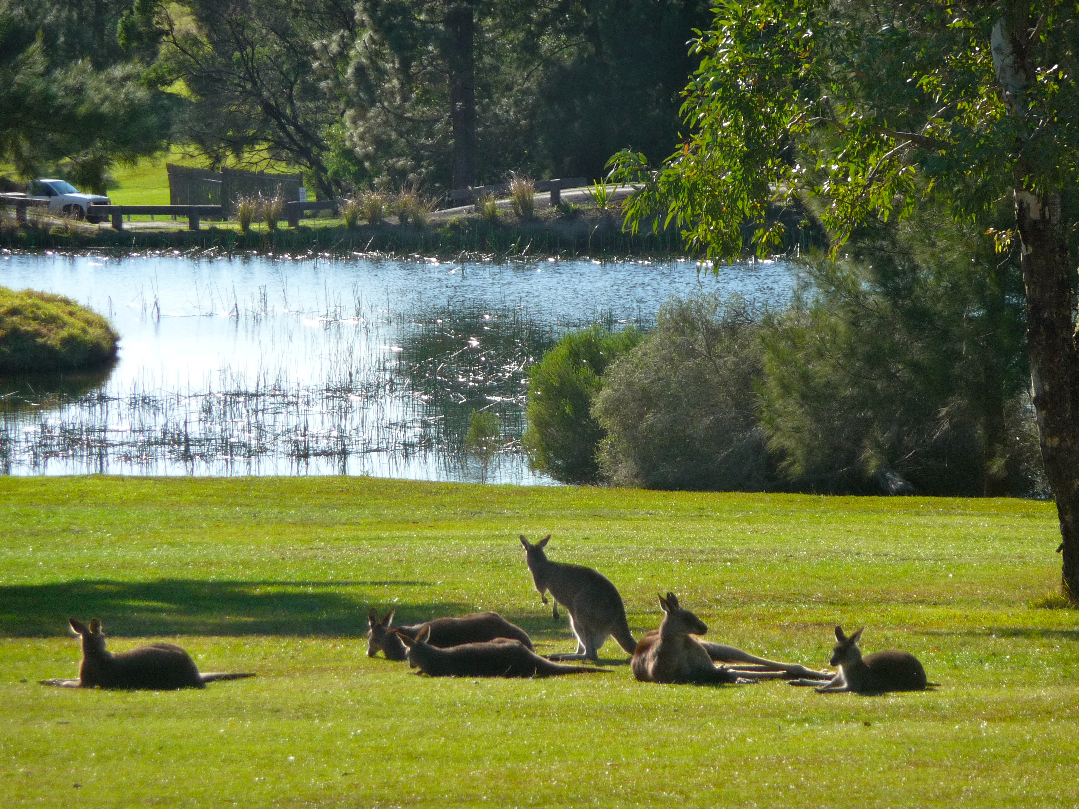 Roos at the golf course