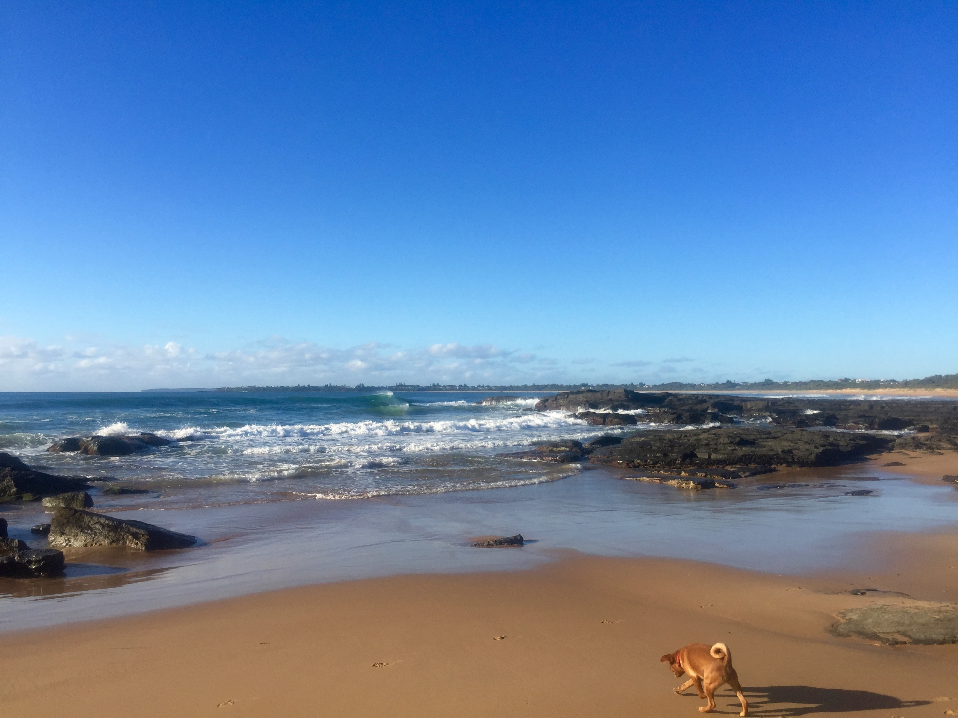 dogs on culburra Beach