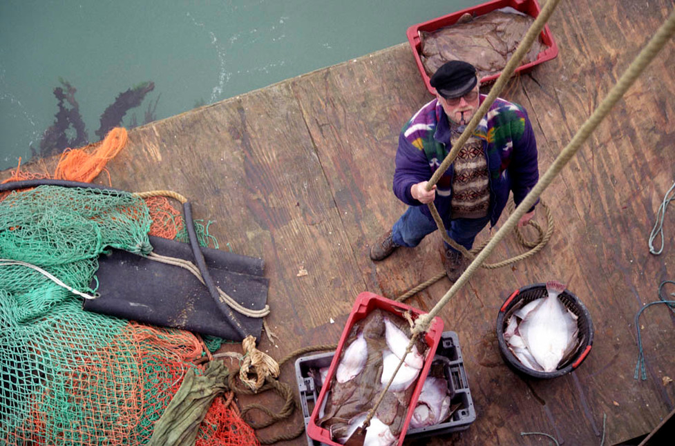 Sea-fishing in Brighton