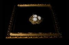 Nest Egg