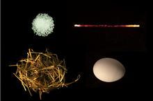 Salt, Wand, Nest, Egg