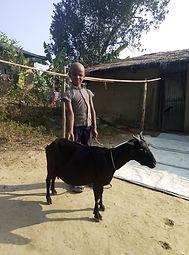 Goat for family.jpg