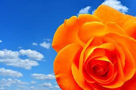 Colour Therapy. 10 therapeutic benefits to the colour orange