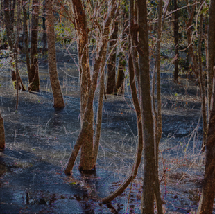 Broad Creek Marsh and trees_900.png
