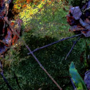 Marsh Fall