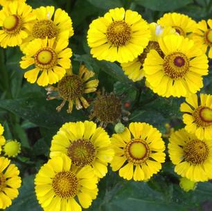 Buterfly Garden Durham, OR