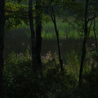Broad Creek 2010 Marsh_1_900.png