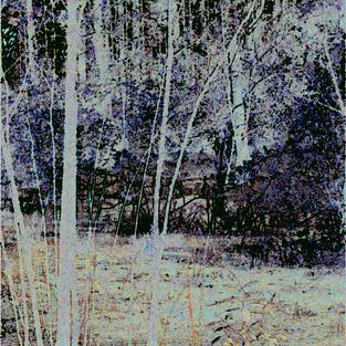 Broad Creek Marsh